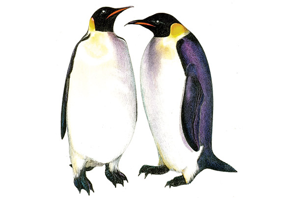 a paper on emperor penguins The fascinating emperor penguins one of mla essay college essays essay help essay writing service write my essay paper writing service write my paper.