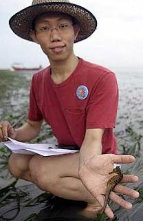 Choo Chee Kuang