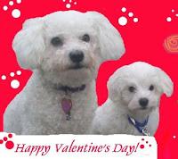 Puppy Valentine Cards