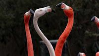 Animal Valentines Day Cards