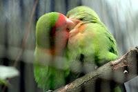 love birds on valentines day