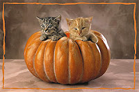 Halloween Kitten Wallpaper - WallpaperSafari