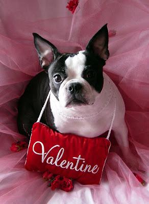 Valentine's Day Dog Ecards