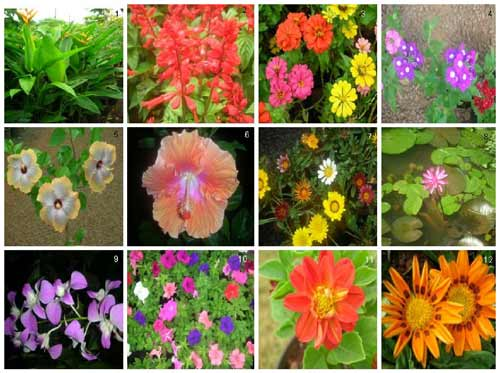 Ornamental Plant Websites - Other Plant Web Sites