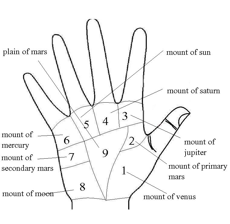 Secrets of happiness lie in the mounts of hand | palmistry: Know ...