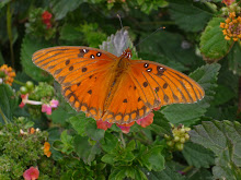 Butterfly at Fort