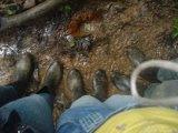 Vida de engenheiro florestal não é nada fácil