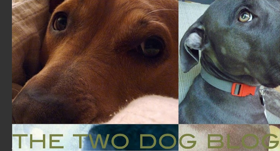 the two dog blog