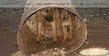 DENUNCIA QUEM MAL TRATA OS ANIMAIS