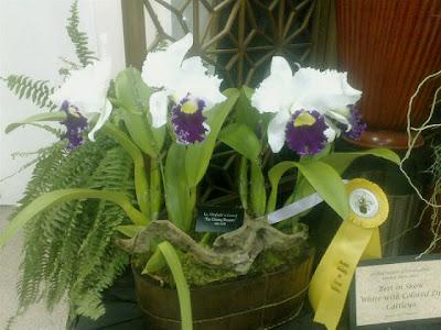 orchid festival fairchild