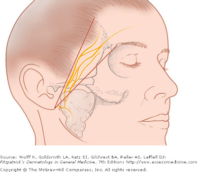Temporal branch of facial nerve