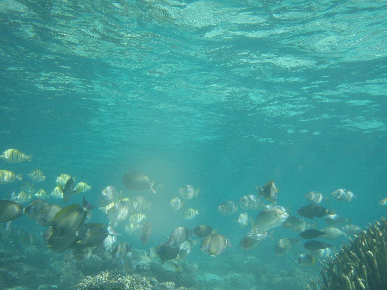 [under+water]