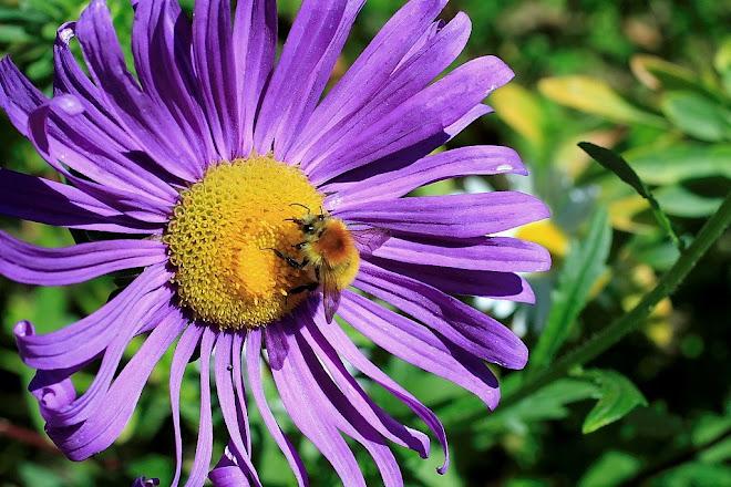 abella treballant a Rupit (osona)