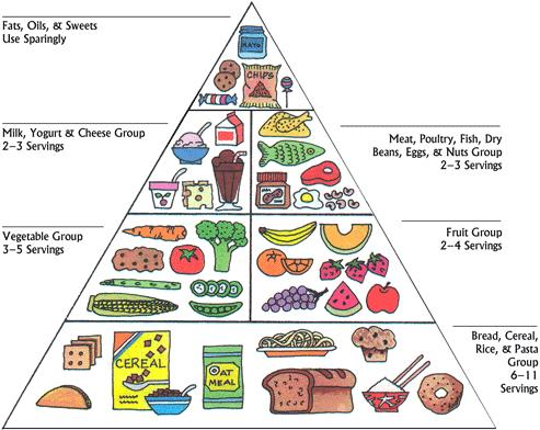 4 food groups for kids. Food pyramid for children has