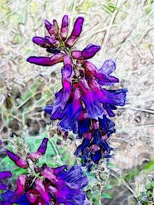 [purple1]