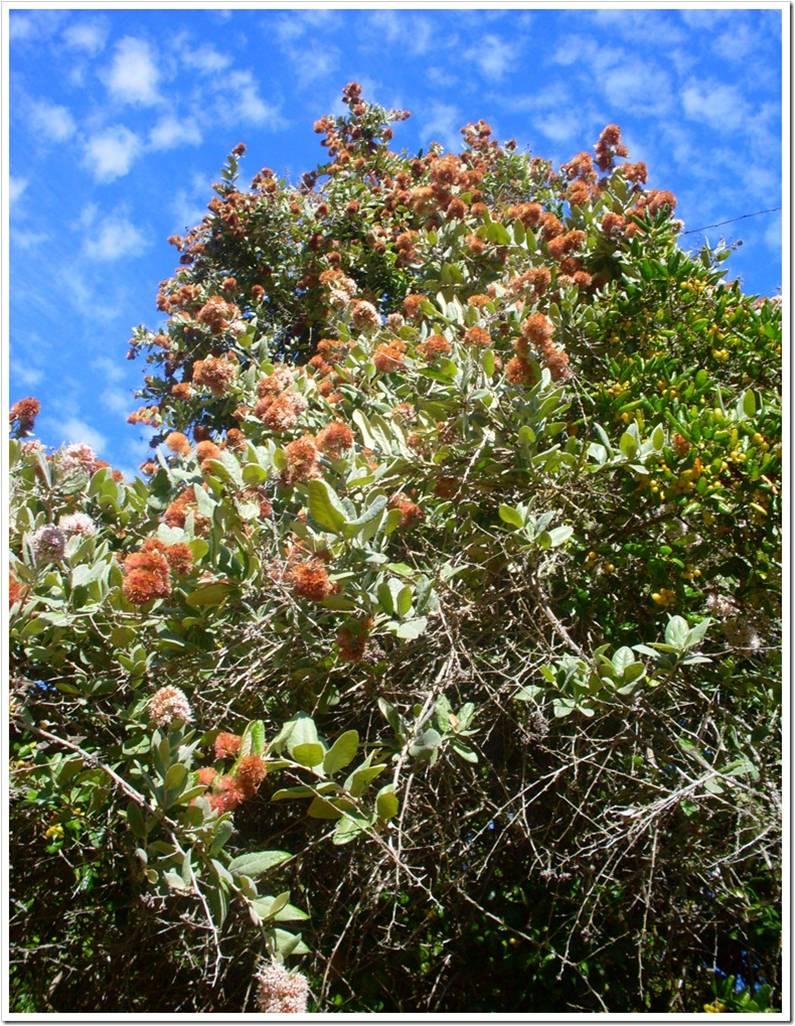 Protectores de la tierra vivero de rboles y plantas nativas for Vivero plantas nativas