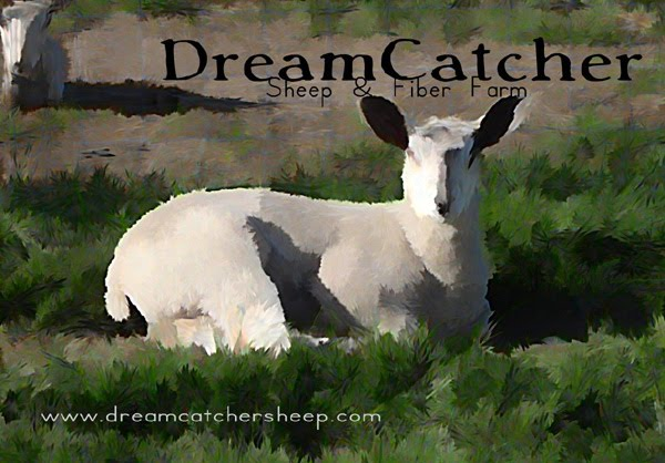 DreamCatcher Sheep & Fiber Farm