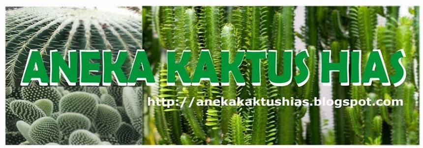 ANEKA KAKTUS:cactus,tanaman hias,sekulen,pot,transplantasi,lembang,bandung