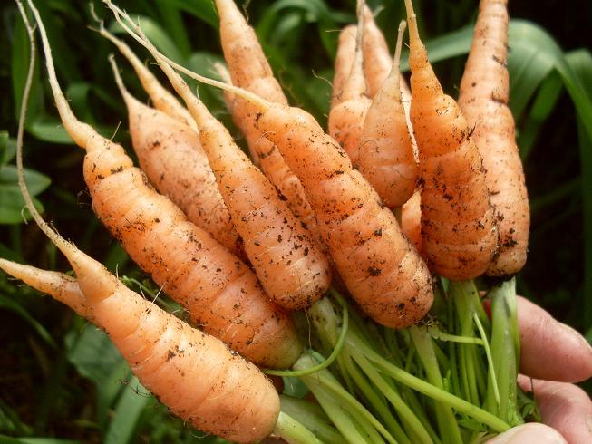 Garden Fresh Nori Rolls