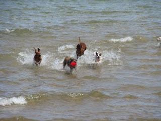 Swimming  Back