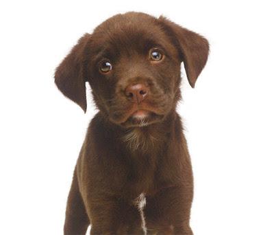 http://3.bp.blogspot.com/_3oxK884Qd8A/THGrz_30UOI/AAAAAAAAFJw/3VTLuPJISJc/s400/Cachorro.jpg