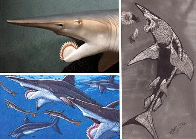 十四種已滅絕怪獸 旋齒鯊