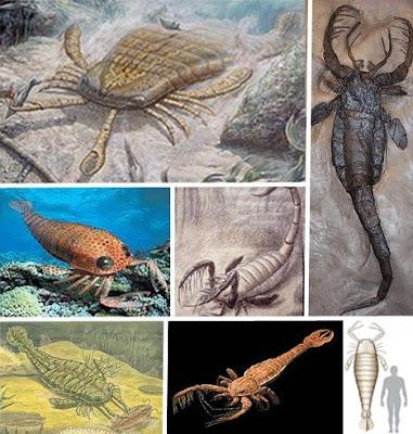 十四種已滅絕怪獸 巨型羽翅鱟