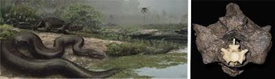 十四種已滅絕怪獸 泰坦蟒