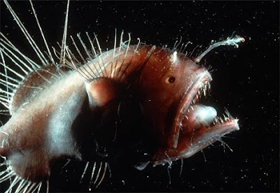 全球十大最恐怖 惡魔魚