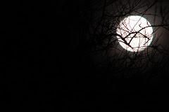 luna entre alpatacos