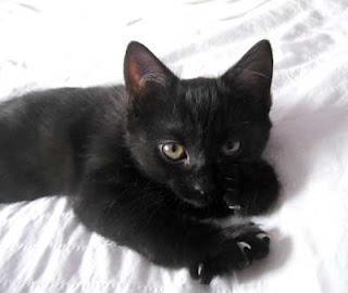 Kucing Item Tersesat Agustus 2009