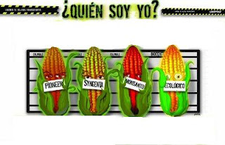 Fitomejoramiento webquest cultivos transg nicos - Ventajas alimentos transgenicos ...