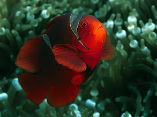 animal fish under sea water coral scenery