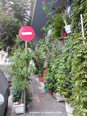 Kήπος φυτά πεζοδρόμιο garden pavement