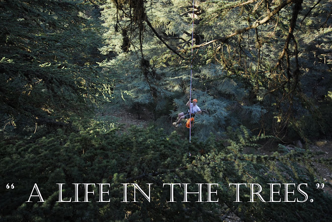 A Life in the Trees