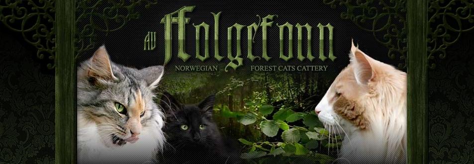 Norwegische Waldkatzen av Folgefonn