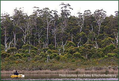 Recherche Bay in Tasmania where Labillardiere discovers Eucalyptus globulus / Recherche Bay en Tasmania donde Labillardiere descubre el eucalipto globulus / GIT Forestry Consulting, Consultoria y Servicios de Ingenieria Agroforestal, Lugo, Galicia, Spain, España, Eucalyptologics