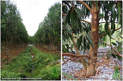 Eucalyptus phytoremediation as green filters in Galicia, Northwestern Spain. / / GIT Forestry Consulting, Consultoría y Servicios de Ingeniería Agroforestal, Lugo, Galicia, España, Spain / Eucalyptologics, information resources on Eucalyptus cultivation around the world / Eucalyptologics, recursos de informacion sobre el cultivo del eucalipto en el mundo