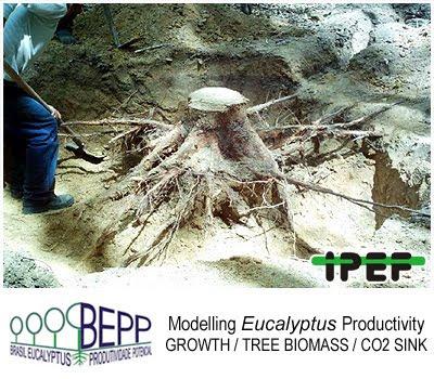 Clonal Eucalyptus Plantations: Growth Rates and Biomass Carbon Sink Potential / Plantaciones clonales de Eucalyptus: Tasas de Crecimiento y potencial de almacenamiento de CO2 en biomasa / Jose Luiz Stape (North Carolina State University), Dan Binkley (Colorado State University), Mike Ryan (USDA) et al / BEPP - Brazil Eucalyptus Potential Productivity Project: Influence of water, nutrients and stand uniformity on wood production / BEPP - Proyecto de Modelizacion de la Productividad Potencial del Eucalipto: Influencia de la disponibilidad de agua, nutrientes y la homogeneidad del rodal en la produccion de madera / Gustavo Iglesias Trabado, Roberto Carballeira Tenreiro and Javier Folgueira Lozano / GIT Forestry Consulting SL, Consultoría y Servicios de Ingeniería Agroforestal, Lugo, Galicia, España, Spain / Eucalyptologics, information resources on Eucalyptus cultivation around the world / Eucalyptologics, recursos de informacion sobre el cultivo del eucalipto en el mundo