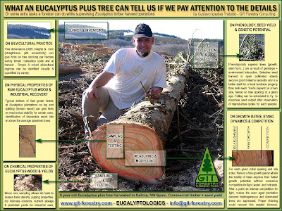 Cold hardy Eucalyptus nitens plus tree as source of information on silviculture, wood properties, tree genetics and stand dynamics / Arbol plus de eucalipto nitens resistente a la helada como fuente de informacion sobre silvicultura, propiedades de la madera, genetica forestal y modelos de crecimiento / GIT Forestry Consulting, Consultoría y Servicios de Ingeniería Agroforestal, Galicia, España, Spain / Eucalyptologics, information resources on Eucalyptus cultivation around the world / Eucalyptologics, recursos de informacion sobre el cultivo del eucalipto en el mundo