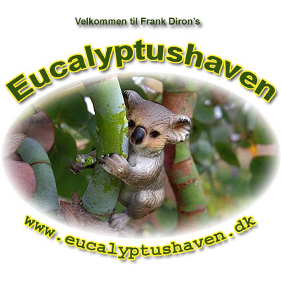 www.Eucalyptushaven.dk / Frank Diron / Fanoe / Jutland / Spinning Gum, Eucalyptus perrininana flowering in Denmark, cold hardy ornamental eucalypt for cold temperate gardens / Eucalipto giratorio en floracion en Dinamarca, eucalipto resistente a las heladas para jardines atlanticos / Gustavo Iglesias Trabado, Roberto Carballeira Tenreiro, Javier Folgueira Lozano y Asociados / GIT Forestry Consulting SL, Consultoría y Servicios de Ingeniería Agroforestal, Lugo, Galicia, España, Spain / Eucalyptologics, information resources on Eucalyptus cultivation around the world / Eucalyptologics, recursos de informacion sobre el cultivo del eucalipto en el mundo