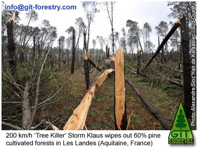 Storm Klaus wipes out the largest Pinus Forest in Europe at Les Landes d'Aquitaine, Southwest France / La tormenta Klaus arrasa el bosque de pino marítimo más grande de Europa en Las Landas de Aquitania, Francia/ GIT Forestry Consulting, Consultoría y Servicios de Ingeniería Agroforestal, Galicia, España, Spain / Eucalyptologics, information resources on Eucalyptus cultivation around the world / Eucalyptologics, recursos de informacion sobre el cultivo del eucalipto en el mundo