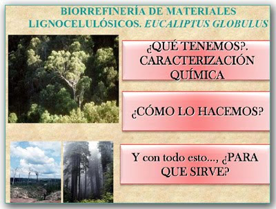 Eucalyptus globulus: a biorefinery of lignocellulosic materials by Francisco Lopez Baldovin / Eucalipto globulus: una biorefineria de materiales lignocelulosicos, por Francisco Lopez Valdovin / Gustavo Iglesias Trabado, Roberto Carballeira Tenreiro and Javier Folgueira Lozano / GIT Forestry Consulting SL, Consultoría y Servicios de Ingeniería Agroforestal, Lugo, Galicia, España, Spain / Eucalyptologics, information resources on Eucalyptus cultivation around the world / Eucalyptologics, recursos de informacion sobre el cultivo del eucalipto en el mundo