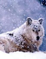 Le Loup - Maupassant - Livre audio gratuit - Au Fil des Lectures