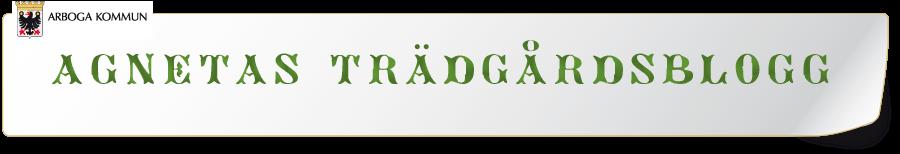 Agnetas trädgårdsblogg
