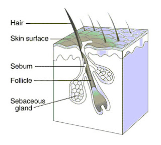 How to prevent clogged hair follicles