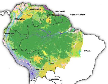 Es la Selva Amazónica el pulmón del mundo?