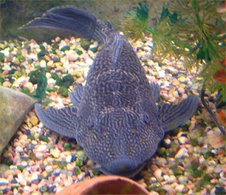 teaching facts of life to toddlers parenting Plecostomus