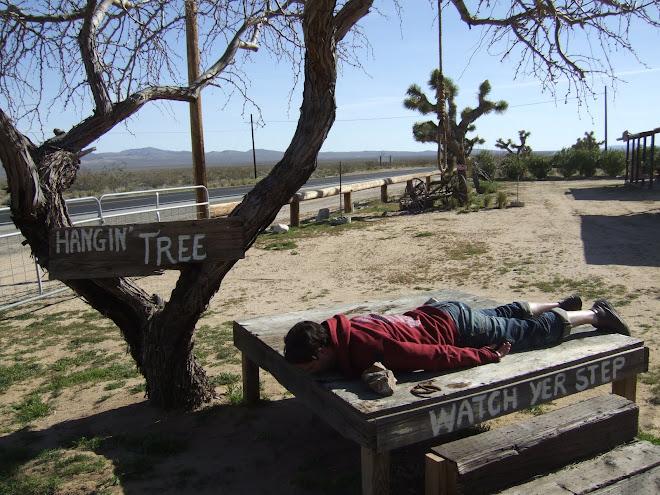 hangin tree