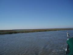 High Tide Georgia Swamp